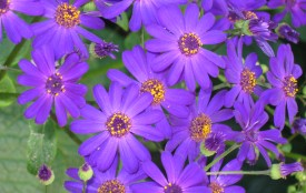 Purple flowers.